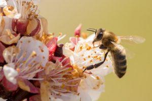 Изменение климата привело к увеличению заболеваемости сезонными аллергиями