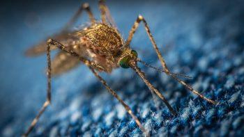 ВОЗ: в Сальвадоре нет малярии